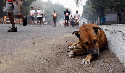 23-Stray-Dog-IndiaInk-blog480